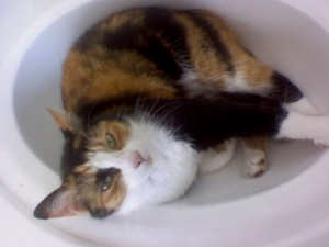 Cat in the Sink (Anne Helmenstine)