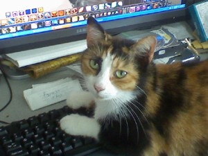 Keyboard kitty strikes again. (Anne Helmenstine)