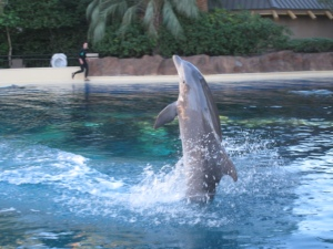 Can you tell it's feeding time for this dolphin? (Mirage, Las Vegas)